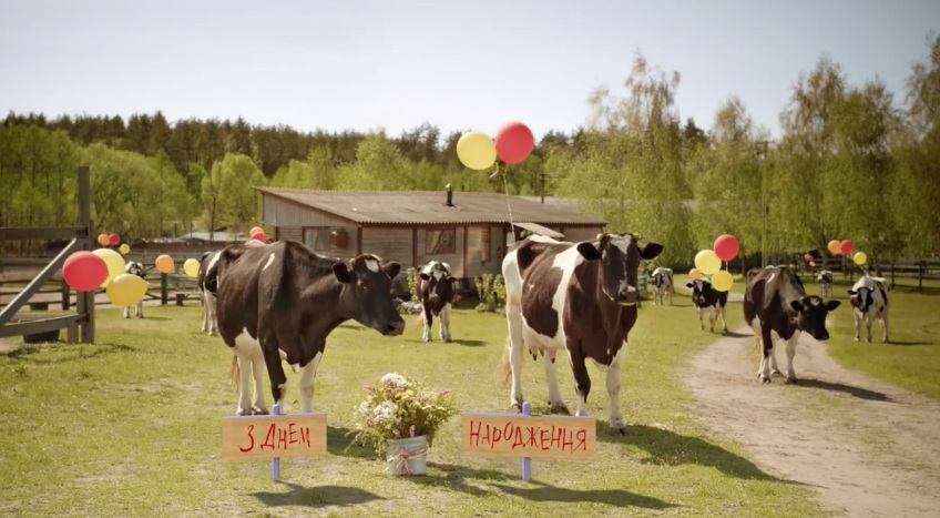 продаем поздравления от коровы на юбилей обратился фотостудию