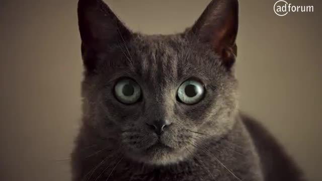 Фото кошачьего секса
