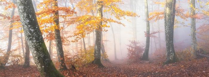 Rustle of Colorful Leaves. Фотография, победившая в категории Mist and Fog