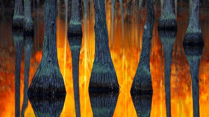 Paul Marcellini / The International Landscape Photographer of the Year