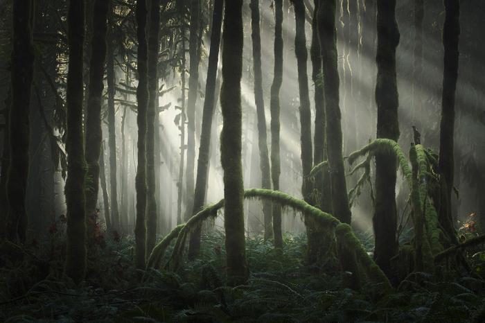 Quiet Light. Одна из фотографий из портфолио Гиббса