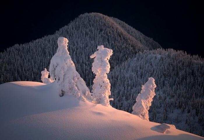 Trees a Crowd. Одна из фотографий из портфолио Гиббса